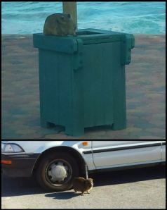 This cute little critter climbs into open bins and shows no fear of cars.